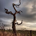 Tree in Gateshead by Great North Views