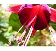 Flower... Photographic Print