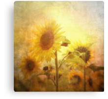 Holding on to the sun Canvas Print