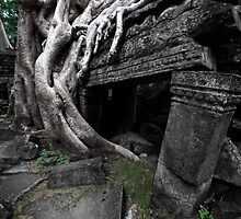 Entwined, Cambodia by Michael Treloar