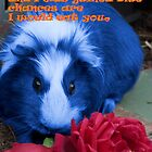 Blue Guinea Pig by Anne van Alkemade
