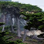 Monterey Cypress by Yukondick
