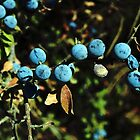 Blue Berries by newbeltane