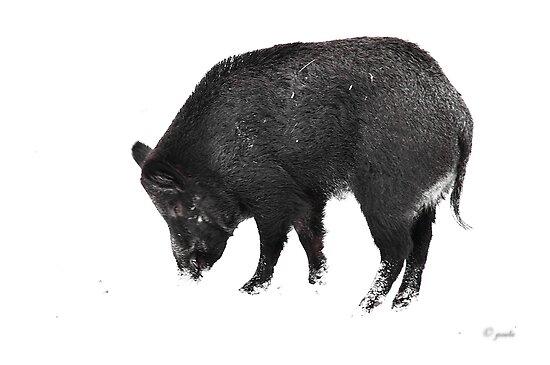 Wild Boar by Poete100