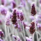 Violet Rift by undeadtofu