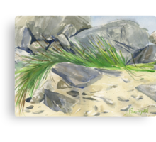green palm leaf on the rocks Canvas Print