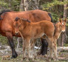 Double Foal by JamesA1