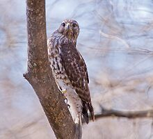Hawk at Lake Martin by Bonnie T.  Barry
