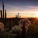 Cactus Sunset  by Saija  Lehtonen