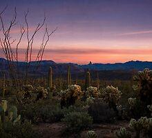 Southwest Serenity  by Saija  Lehtonen