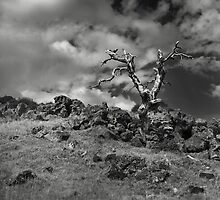 Lone Remains by Peter Denniston