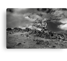 Lone Remains Canvas Print