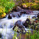 Sunrise Spring Mountain Creek by Reese Ferrier