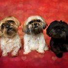 Lovely Trio  by Nicole  Markmann Nelson