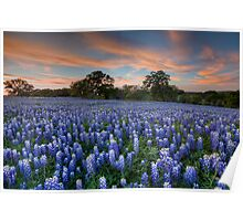 Texas Bluebonnets in the Hill Country 1 Poster