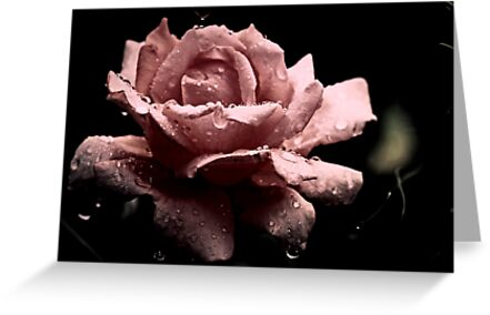 """""""Precious in Pink..."""" by Rosehaven"""
