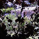 Looking Through a Fallen Leaf by Gabrielle  Lees