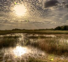 Everglades Afternoon by njordphoto
