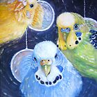 big budgie's by Gill Bustamante