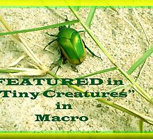 Banner- TINY CREATURES IN MACRO- NEW GROUP!  by Ann Warrenton