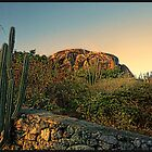 Desert Cactus by Bill Gorman