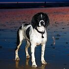 benson at cooden beach - sunset by Paul Morris