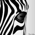 zebra 3  by mark ashkenazi