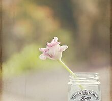Tulip in jelly jar by Debbie Allan