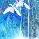 Snowdrop arrival! by Jacki Stokes