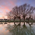 Five Trees & Five Cows - Dedham, Suffolk by Justin Minns