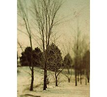 December Trees Photographic Print