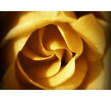 NOVEMBER ROSE Photographic Print