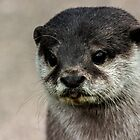 Otter  by Barry Robinson