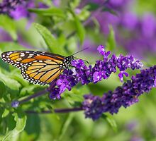 Butterfly 2 by John Velocci