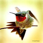 HUMMINGBIRD WALKING WIRE by Randy & Kay Branham