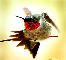 HUMMINGBIRD WALKING WIRE by Randy & Kay Branham