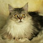 Mainecoon Cat by ritch103