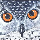Owl- I&#x27;m watching you by Joanna Evans