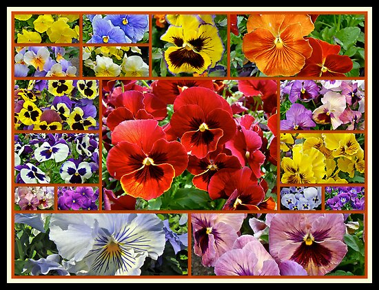 Pansies - A Bouquet For Any Day by MotherNature