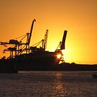 Cranes at Sunset by Stuart Daddow Photography