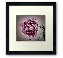 Peony Tulip Framed Print