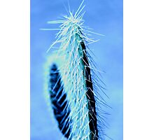 Spikey Photographic Print