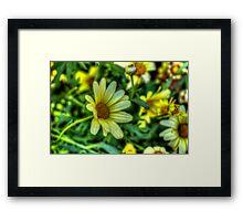 Daisy 6 Framed Print