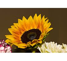 Sunflower 7 Photographic Print