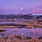 Moon Over Farmers Pond by Cat Connor