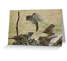 Sparrow Hovering Over Seed Cake Greeting Card