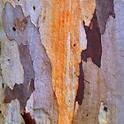 Bark Painting #4 by Bette Devine