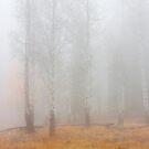 Autumn Reveals by DawsonImages