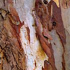 Bark Painting #5 by Bette Devine