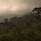 &quot;Cloud Forest Sunset&quot; -- Costa Rica by Matt Tilghman